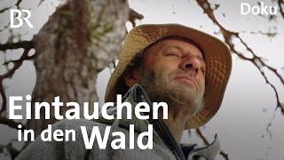 Wald als Therapeut Waldbaden mit dem Schmidt Max  freizeit  Doku  BR