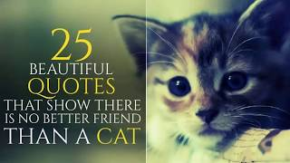 """25 beautiful quotes for CATS- funny cats."" 