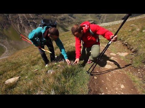 Klimawandel & Alpine Ökosysteme