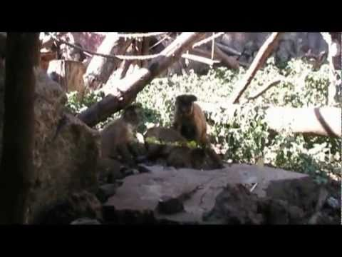Un Pomeriggio al Bioparco (2007) – Documentario amatoriale – Parte 1di3