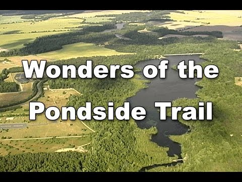 Wonders of the Pondside Trail