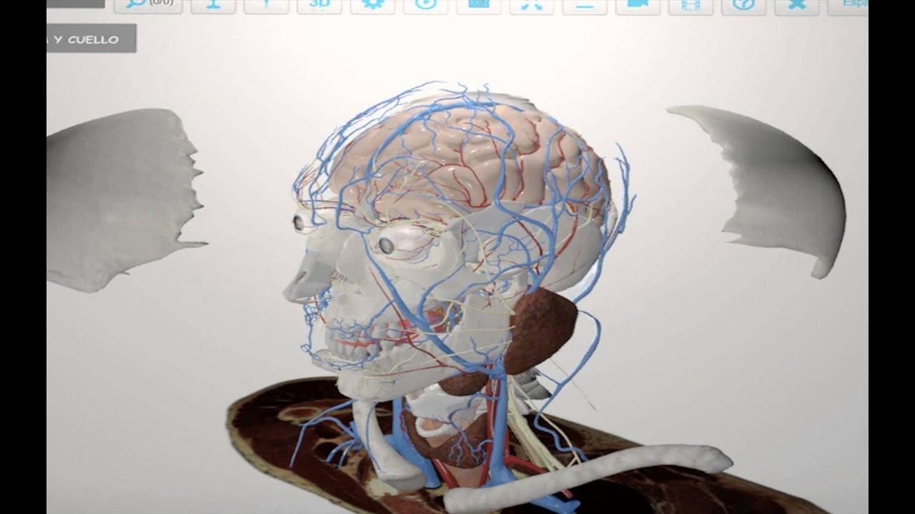 BioTK - 3D Anatomy Atlas