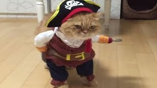 funny CATS in COSTUMEs compilation