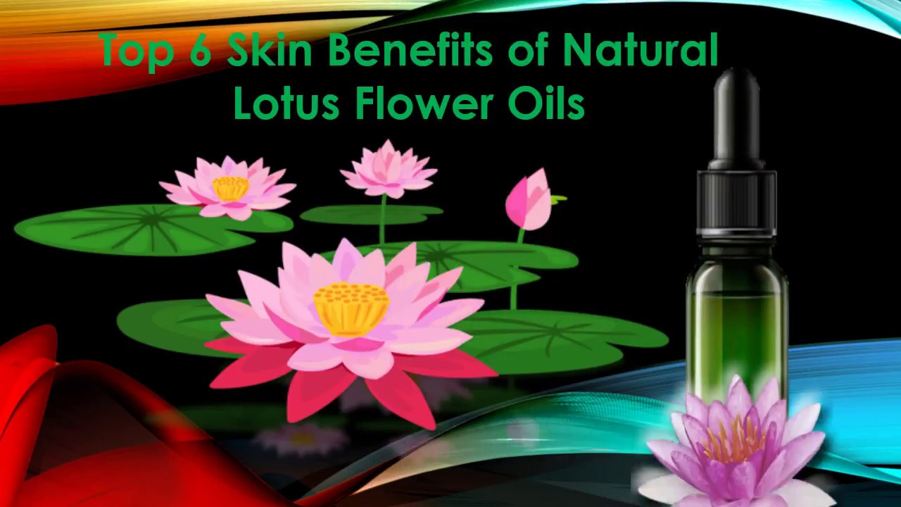 Top 6 Skin Benefits Of Natural Lotus Flower Oils Youtube