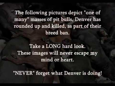 Denver Pitbull Massacre 2011 by Kidwell Productions 2011.wmv