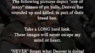 Denver Pitbull Massacre 2011 By Kidwell Productions 2011.wmv