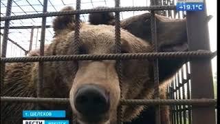 медведь оторвал руку посетителю кафе в Шелеховском районе. Подробности, «Вести-Иркутск»