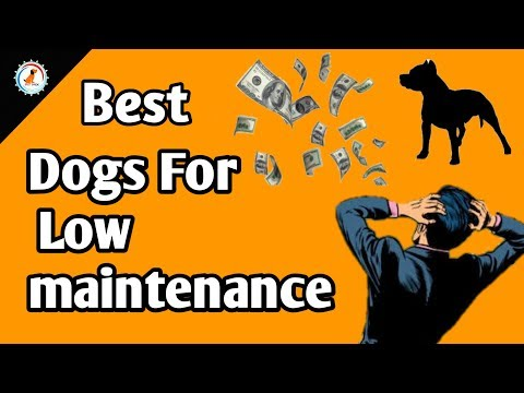 Low Maintenance Dog Breeds / Low Maintenance Dogs In India /Best Dog With Low Maintenance