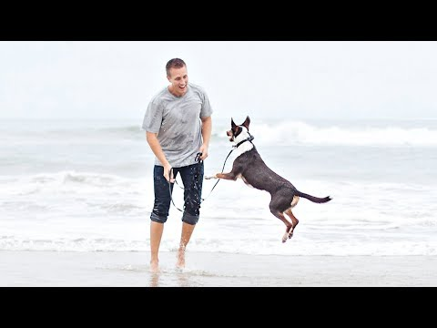 Blind Rescue Dog Feels Ocean Waves for the First Time   Amazing Reaction