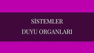 SİSTEMLER - DUYU ORGANLARI