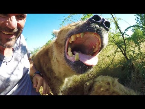 Hanging With Hyenas | The Lion Whisperer