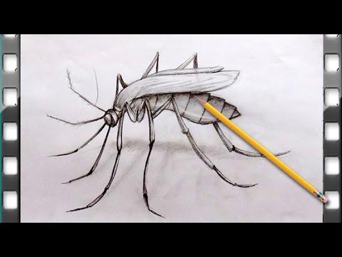 Como Desenhar Um Mosquito Como Desenhar Um Mosquito Passo A
