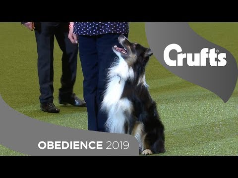 Obedience - Champion (Dog) & Reserve (Dog) Display | Crufts 2019