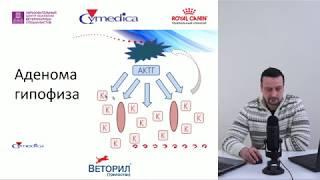 Беленсон М. М. - Основы диагностики и лечения ГАК (синдрома Кушинга)