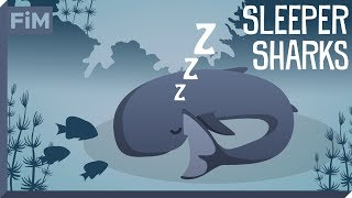 Animated Shark Facts - Sleeper Sharks