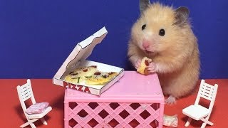 ????Hamster eats miniature pizza in dollhouse????Minifood / ミニチュアドールハウス