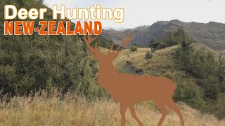 Hunting deer in  N-Zélande with Ovini Expéditions 2015