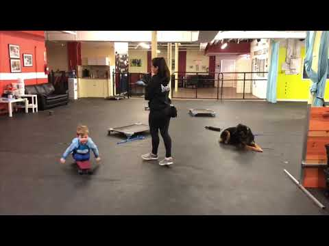 Child reactive dog | Dog Training Protocol