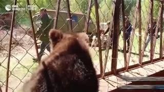 Спасенный медвежонок Балу
