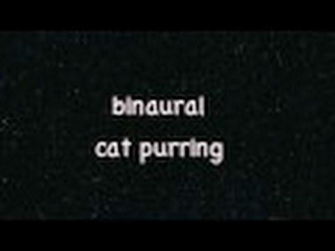 ASMR: binaural cat purring *10min*