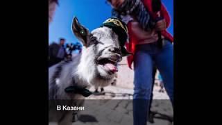Исход матчей ЧМ-2018 по футболу предскажет коза-оракул