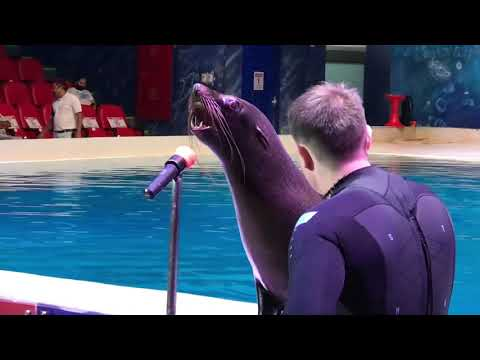 Seal Lion Singing *Crazy* *Amazing* | Best show in the world| Dubai Dolphinarium| 2020 Pandemic Vlog