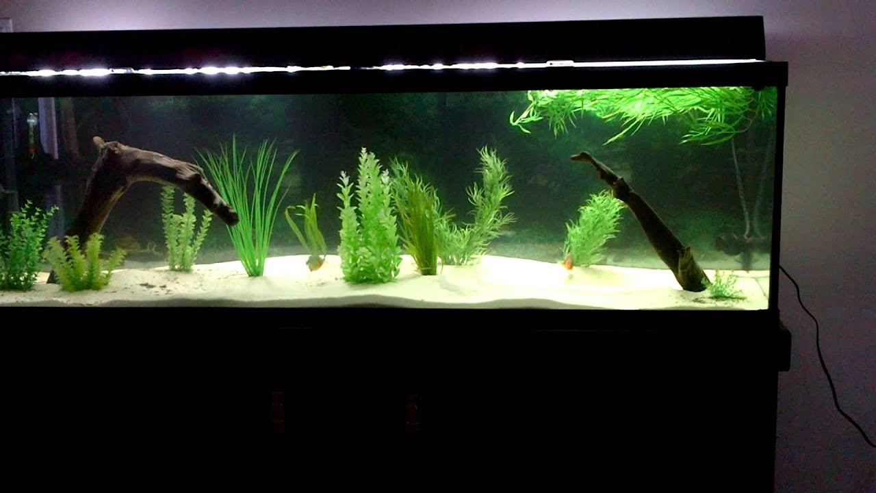 Piranha fish tank feeding images for Piranha fish tank