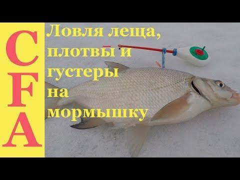 Ловля леща, плотвы и густеры зимой на мормышку.  Зимняя рыбалка 2019