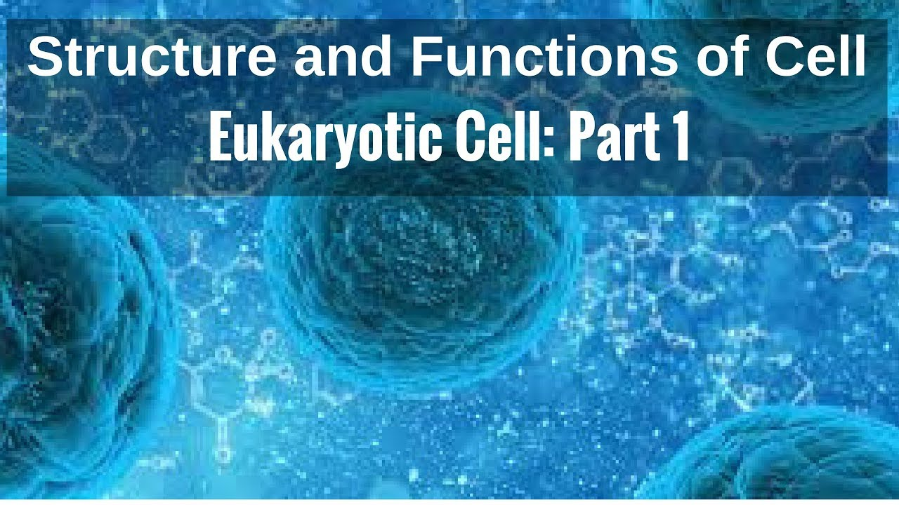 Structure And Functions Of Cell Eukaryotic Part 1 Youtube