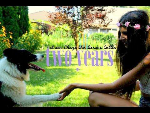 Cheza 2 years ♡ Amazing dog tricks