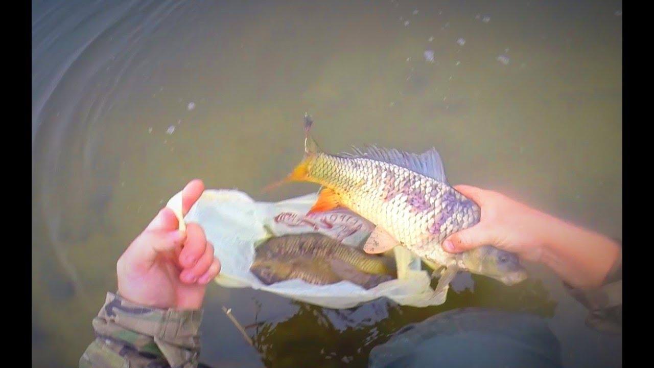 рыбалка на живым видео