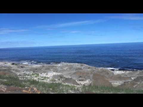 Beluga Whales Hudson bay Churchill Manitoba