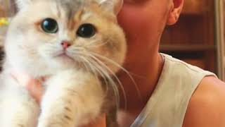 Кот в руках это счастье.