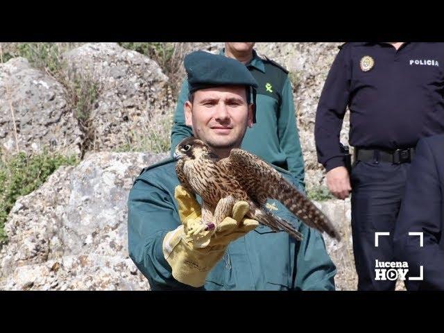 VÍDEO: Estuvimos en la suelta de un halcón peregrino en la Sierra de Aras. ¡Te lo contamos!