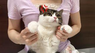苦手な爪切りでママに怒る息子猫