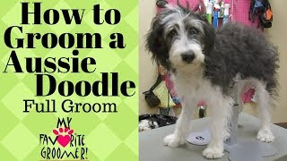 How to Groom a  AussieDoodle thumbnail