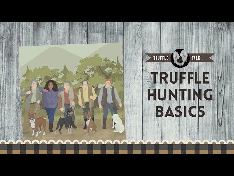How To Find Truffles In The Woods