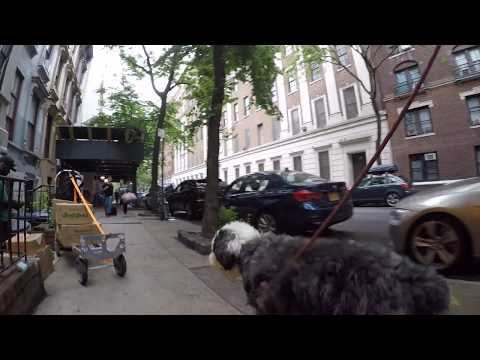 slowTV.network NYC A Walk with Stan the Dog