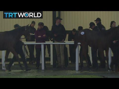 Money Talks: Ireland's racehorse industry fears bleak future