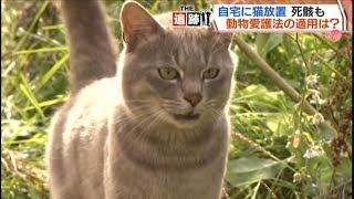 【HTBセレクションズ】また多頭飼育の悲劇が…放置されたネコ