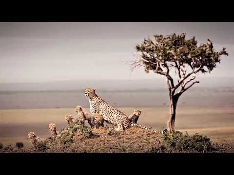 African Wildlife - my passion - Klaus Tiedge