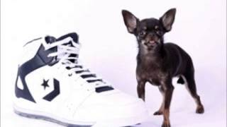 Miracle Milly: World's Smallest Dog At 3.8 Inches