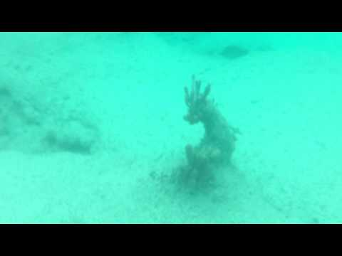 Grand Cayman Day 6   Full Snorkeling Video