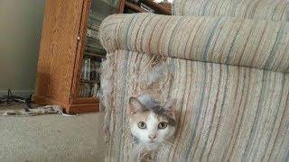 ★Что делать, чтобы кот перестал портить мебель, обои. Отучить кошку очень просто, нужно сделать так…
