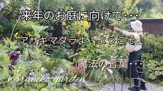 来年のお庭に向けて・・・アサギマダラよ!ようこそ♪魔法の言葉・・・\For next year's garden Chestnut tiger butterfly has arrived!