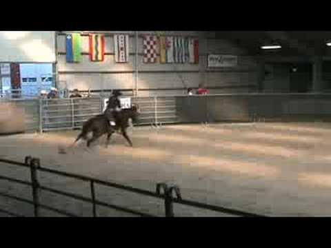 Money makes the Law -Working Cowhorse -Holland 2008
