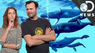 What Happens When Endangered Animals Come Back?
