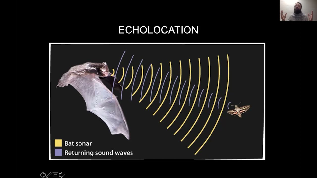Image for Nature Talk: Welcome to the Bat Cave webinar