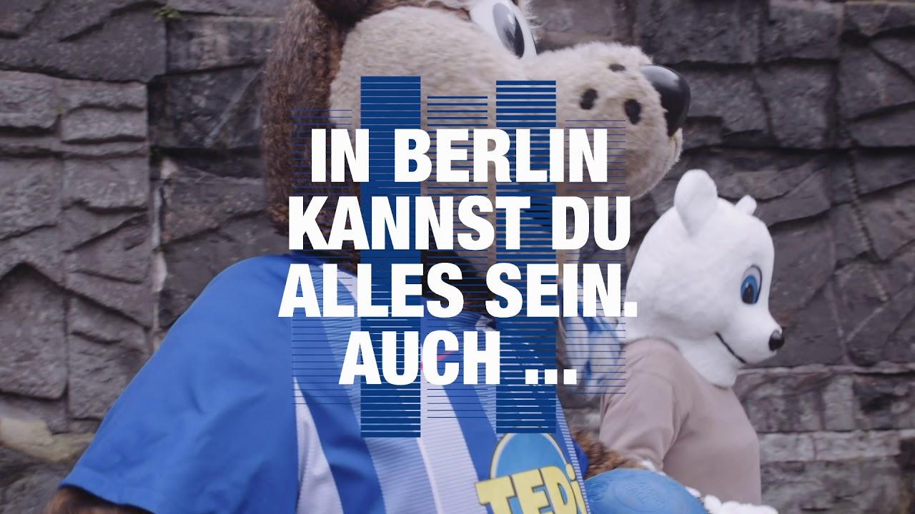 eisbär hertha berlin