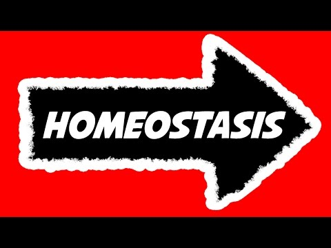 Homeostasis Explained - Definition, Metaphor, Examples